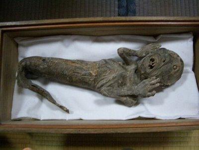 Mummified Japanese Mermaid