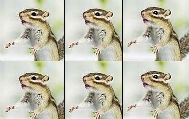killer chipmunks