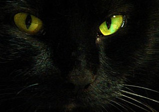 black-cat_01