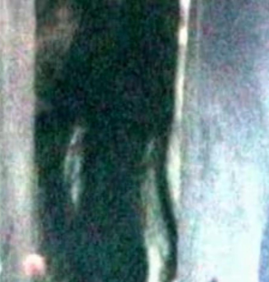 ghost videos 2009,ghost video footage,ghost pictures,ghost video clips,ghost videos caught on tape,pit crew ghost,real ghost videos 2009,real ghost videos,ghost videos 2010,